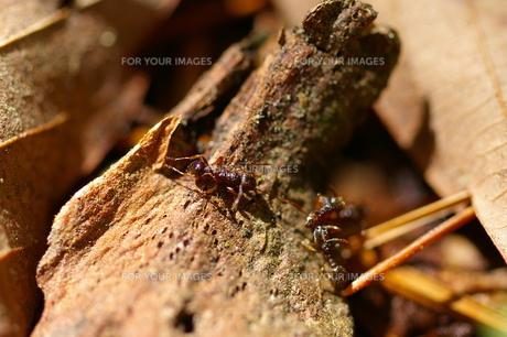 森のアリの写真素材 [FYI00200644]