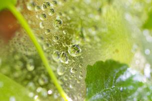 水玉とグリーンの写真素材 [FYI00200657]