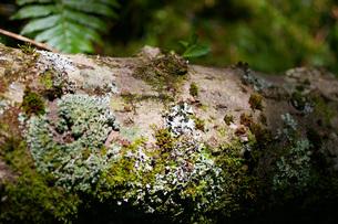 苔むす倒木の写真素材 [FYI00200705]