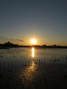 谷津干潟の写真素材 [FYI00200739]