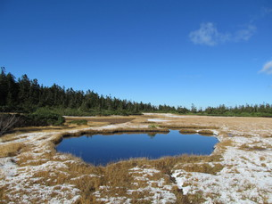 八幡平の黒谷地湿原の写真素材 [FYI00200740]