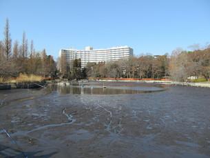 井の頭公園 かいぼりの写真素材 [FYI00200744]