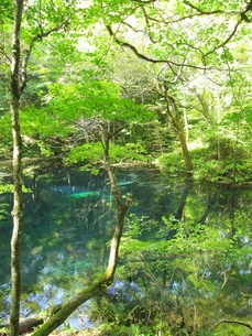 十二湖 沸壺の池の写真素材 [FYI00200759]