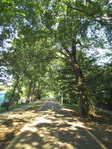 多摩湖自転車道の写真素材 [FYI00200762]
