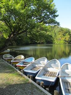 十二湖 八景の池の写真素材 [FYI00200766]