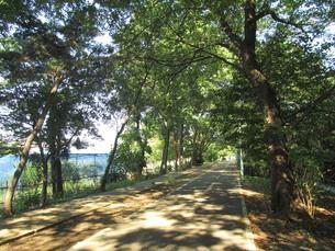 多摩湖自転車道の写真素材 [FYI00200775]