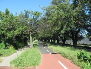 多摩湖自転車道の写真素材 [FYI00200776]