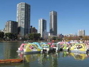 上野公園のボートの写真素材 [FYI00200783]