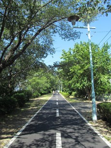 多摩湖自転車道の写真素材 [FYI00200786]