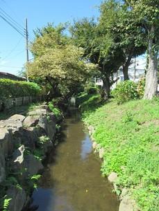 千川上水の写真素材 [FYI00200802]