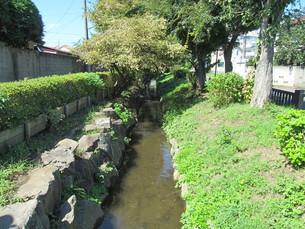 千川上水の写真素材 [FYI00200807]