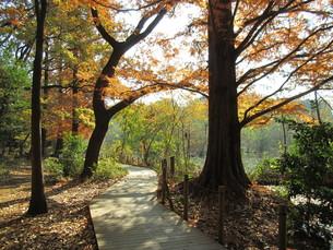 石神井公園 秋の遊歩道の写真素材 [FYI00200813]
