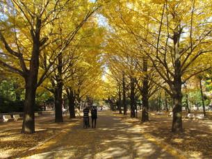 紅葉の光が丘公園の写真素材 [FYI00200818]