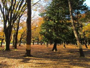 秋の公園とコモ巻きの写真素材 [FYI00200821]