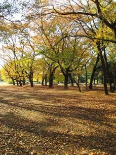 秋の公園の写真素材 [FYI00200827]