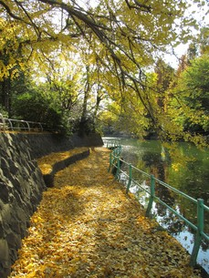 武蔵関公園の秋の写真素材 [FYI00200832]