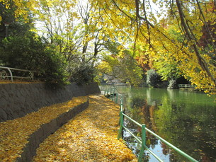 武蔵関公園の秋の写真素材 [FYI00200841]