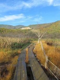 八幡平の御在所湿原の写真素材 [FYI00200890]