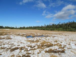 八幡平の黒谷地湿原の写真素材 [FYI00200901]