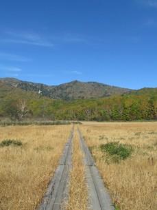 八幡平の御在所湿原の写真素材 [FYI00200909]
