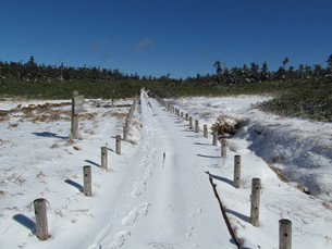 八幡平湿原の遊歩道の写真素材 [FYI00200943]