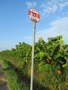 草地とバス停の写真素材 [FYI00201056]