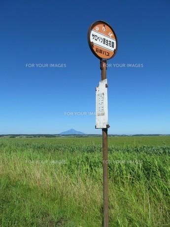 サロベツ原野とバス停の写真素材 [FYI00201077]
