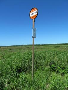 草原とバス停の写真素材 [FYI00201377]