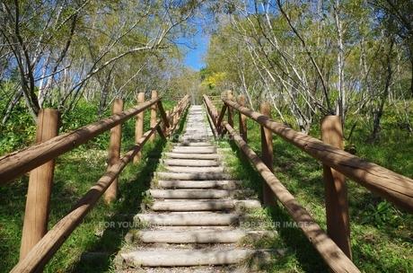 森と遊歩道の階段の素材 [FYI00201952]