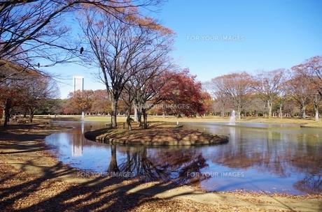 代々木公園の池の素材 [FYI00202002]