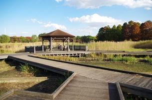 秋の舎人公園の写真素材 [FYI00202005]