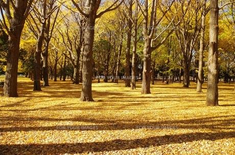 秋の代々木公園の素材 [FYI00202011]
