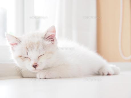 仔猫-おやすみの写真素材 [FYI00202038]