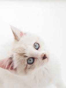 仔猫-見上げる2の写真素材 [FYI00202041]