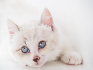 仔猫-見上げるの写真素材 [FYI00202042]