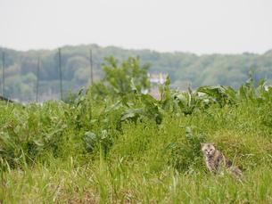 猫と自然の写真素材 [FYI00202045]