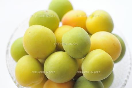 梅の実の写真素材 [FYI00202150]