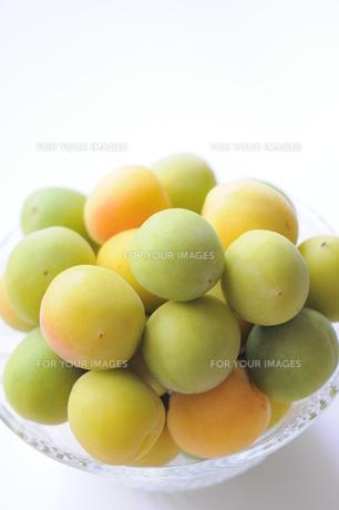 梅の実の写真素材 [FYI00202157]