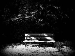 木洩れ日のベンチの素材 [FYI00202177]