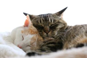 寄り添う猫#2の素材 [FYI00202231]