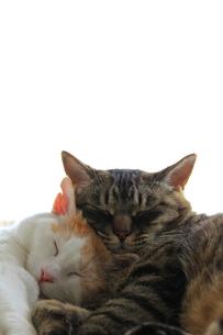 寄り添う猫#4の素材 [FYI00202272]