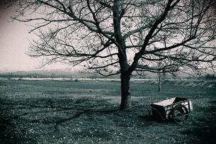 枯れ木と台車の写真素材 [FYI00202293]