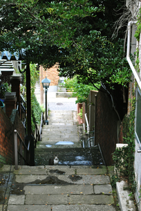 階段の街と猫の写真素材 [FYI00202314]