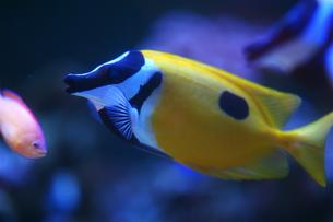 熱帯魚の写真素材 [FYI00202372]