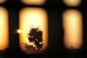 木のシルエットの写真素材 [FYI00202386]