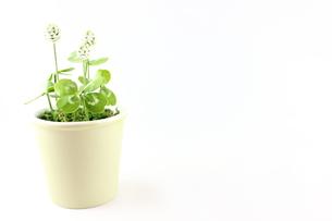 樹脂粘土の草花の素材 [FYI00202402]