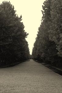 木々に挟まれた道の写真素材 [FYI00202475]