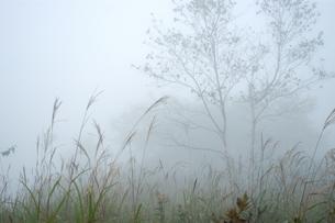 八島湿原の写真素材 [FYI00202637]