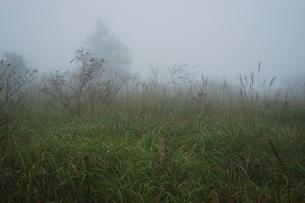 八島湿原の写真素材 [FYI00202645]