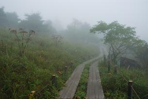 八島湿原の写真素材 [FYI00202646]